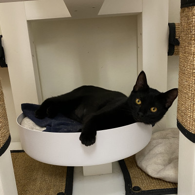 Image For Post Yara chilling out at Greater Birmingham Humane Society